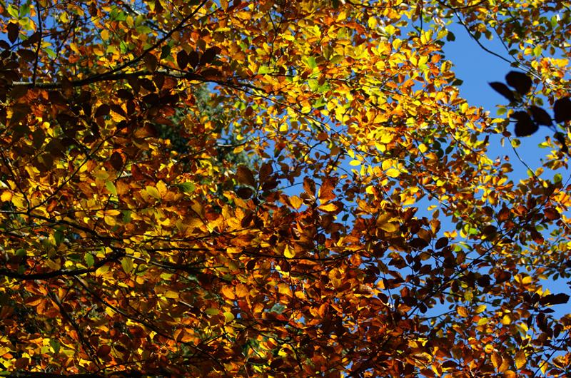 Das große Herbstarrangement
